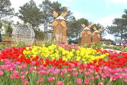 Festival hoa Đà Lạt 2013-2014