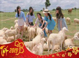 Du lich Tet 2019: Vung Tau - Long Hai - Nong trai cuu