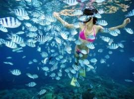Tour Nha Trang Le 2-9-2015 gia re nhat