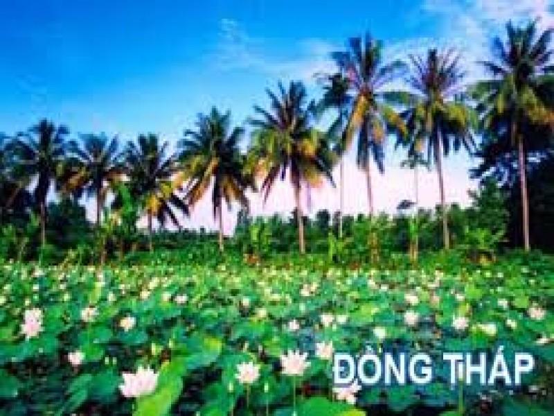 Tour Dong Thap - Khu Du Lich Gao Giong