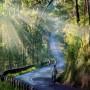Đèo Prenn vẻ đẹp hút hồn
