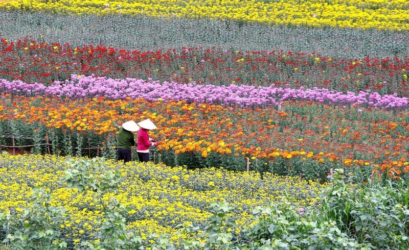 Làng hoa Vạn Thành